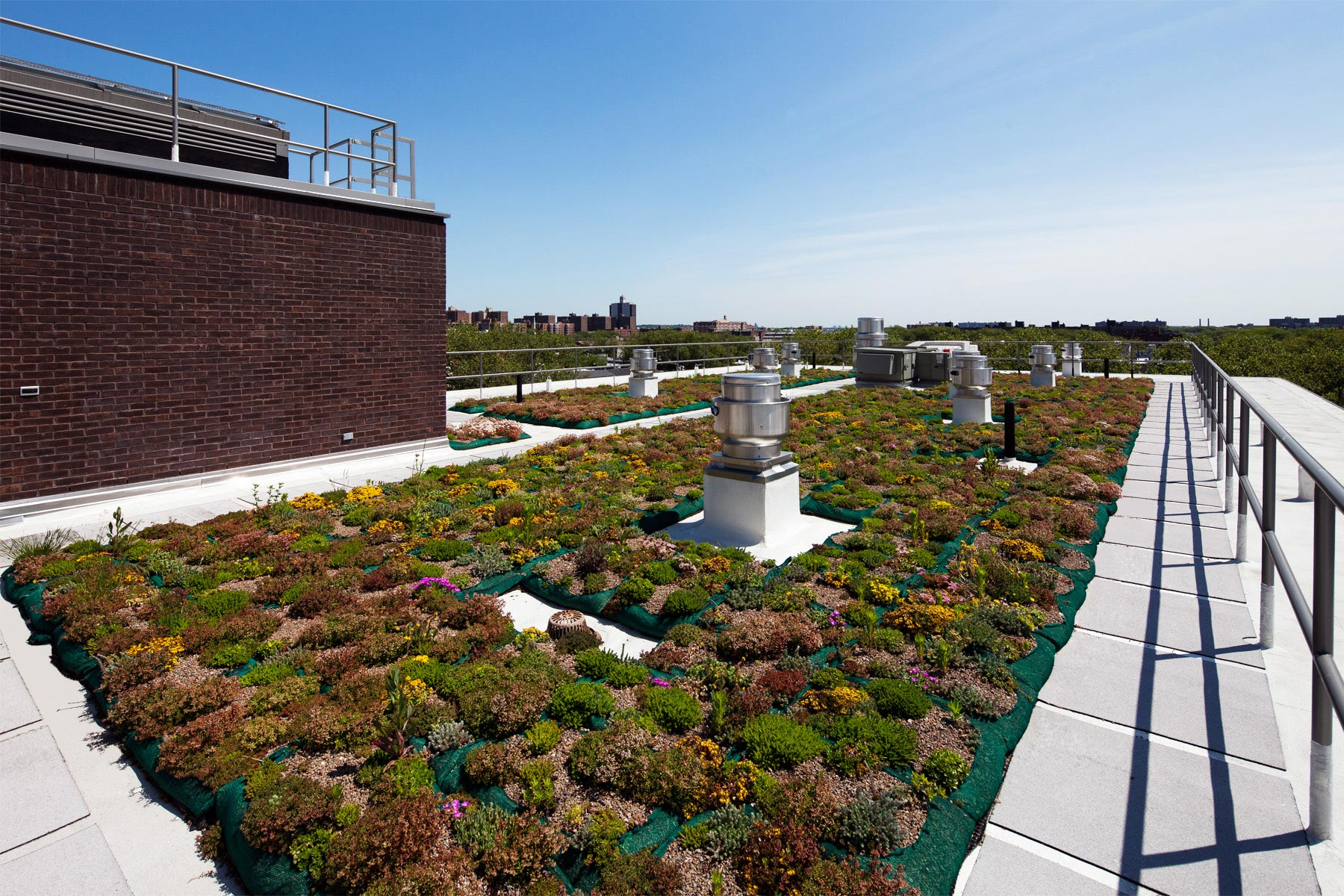 Roof garden on Breaking Ground's Hegeman residence in Brownsville, Brooklyn. The garden is designed not only to be beautiful but to improve the building's energy efficiency.